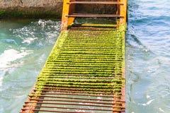 Een roestige ladder in het water stock foto