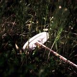 Een rommel gemaakte van dichte mening van lazaruze stro en kopbovenkant stock foto's