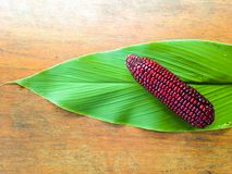 Een rood graan Stock Afbeeldingen