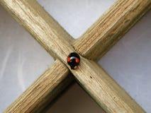 Een Rood stippelt Zwart Lieveheersbeestje Beklimmend op een Houten Decoratiedocument Deur Stock Afbeelding