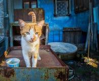 Een roodharige kat met een oude schurk De kat is in de legendarische binnenplaats van Odessa stock afbeeldingen