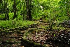 Een rots-gevoerde, curviing wandelingssleep in een ecologische reserve van Costa Rican stock fotografie