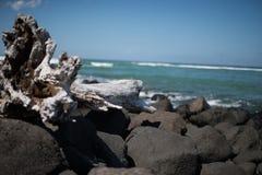 Een rotsachtig strand met grote drijfhoutboom in voorgrond Stock Foto