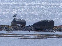 Een rotsachtige toppositie, Noordzeekust stock foto