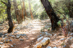 Een rotsachtige weg in een bos Stock Fotografie