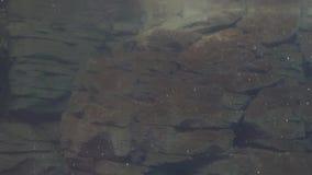Een Rotsvorming Onderwater stock videobeelden