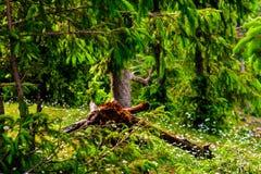 Een rottende boom onder weelderig groen royalty-vrije stock afbeeldingen
