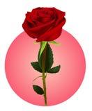 Een Roze bloem (netwerk) Royalty-vrije Stock Foto