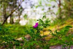 Een roze bloem op groene vage achtergrond stock afbeeldingen