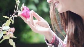 Een roze struik nam golvend in de wind toe stock video