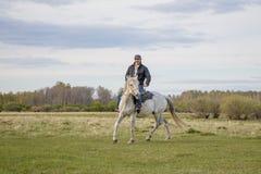Een ruiter op een wit paard op het gebied stock foto's