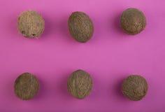 Een samenstelling van kokosnoten op een karmozijnrode achtergrond Een hoogste mening over zes gehele kokosnoten Reeks gezonde exo Royalty-vrije Stock Afbeeldingen