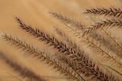 Een samenvatting van woestijn bloeiende grassen stock foto's