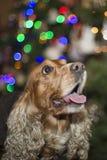 Een santa kleedde Kerstmiskerstmis van de puppyhond Stock Foto's