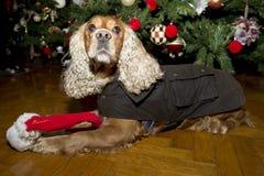 Een santa kleedde Kerstmiskerstmis van de puppyhond Royalty-vrije Stock Afbeelding