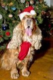 Een santa kleedde Kerstmiskerstmis van de puppyhond Stock Afbeeldingen