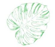 Een schets van een tatoegering is een contour Tropisch Blad Royalty-vrije Stock Fotografie