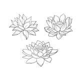 Een schets van mooie lotuses in een bevallig ornament op een witte achtergrond royalty-vrije stock afbeeldingen