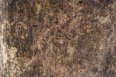 Een schil van boomachtergrond stock foto