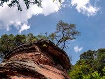 Een schilderachtige boom bovenop een klip stock afbeeldingen