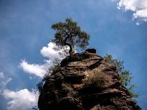 Een schilderachtige boom bovenop een klip stock foto