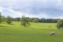 Een schilderachtige pastorale scène Royalty-vrije Stock Fotografie