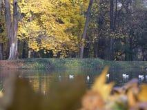 Een schilderachtige plaats in het de herfstpark stock afbeeldingen