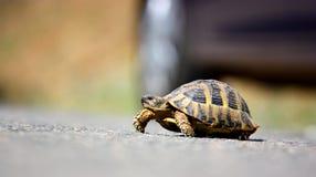 Een schildpad royalty-vrije stock afbeelding