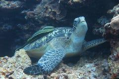 Een schildpad Stock Foto