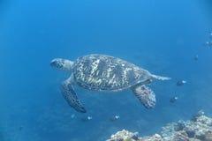 Een schildpad Royalty-vrije Stock Foto's