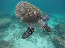 Een schildpad in de ondiepe ertsaders van de Maldiven Royalty-vrije Stock Afbeeldingen
