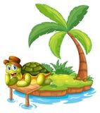 Een schildpad die in een eiland is vastgelopen Stock Foto's