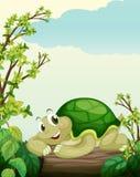Een schildpad die op droog hout liggen royalty-vrije illustratie