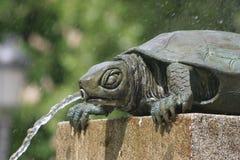 Een schildpad in een fontein Stock Foto's