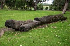 Een schildpad kijkt gesneden houten bank in het Nationale Park van Yanchep Royalty-vrije Stock Foto