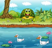 Een schildpad naast de rivier met eenden Royalty-vrije Stock Foto's