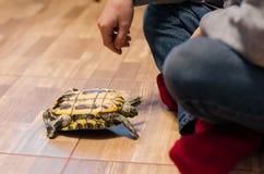 Een schildpad op de vloer thuis stock foto's