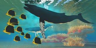 Walvissen en Koraalrif vector illustratie