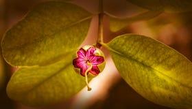 Een Schoonheidsbloem Stock Foto's