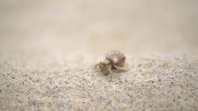 Een schot van kleine krab met plattelandshuisje het lopen ergens op het strand stock footage