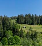 Een schuur op een heuvel door het bos stock foto's