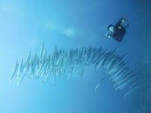 Een scuba-duiker met ondiepte Royalty-vrije Stock Afbeeldingen