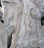 Een Sectie van Zon Gebleekt Drijfhout Stock Fotografie