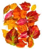 Een selectie van terug aangestoken de herfstdaling gaat weg Stock Foto's