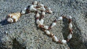 Een shell halsband op een zandig die strand door de zon wordt verlicht Royalty-vrije Stock Fotografie