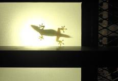 Een silhouet van een huis of een binnenlandse hagedis Stock Foto