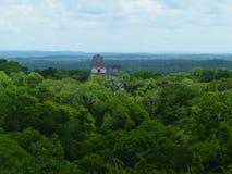 Een sjaal van groen voor Tikal Stock Foto's