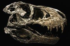 Een skelet van een dinosaurus Stock Afbeelding