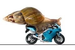 Een slak berijdt een het rennen motorfiets, concept snelheid en succes, op een witte achtergrond royalty-vrije stock afbeelding