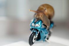 Een slak berijdt een het rennen motorfiets, concept snelheid en succes, selectieve nadruk stock foto
